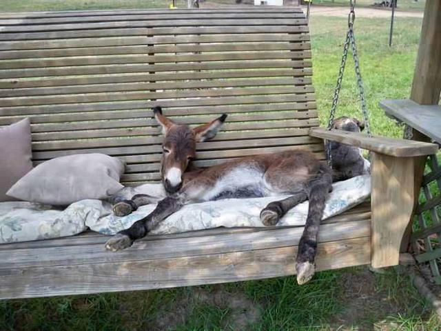 For Joy in God's Creation: donkey gets comfortable. (Andrea Martin)
