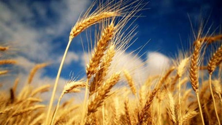 The seed has to die to produce more wheat.