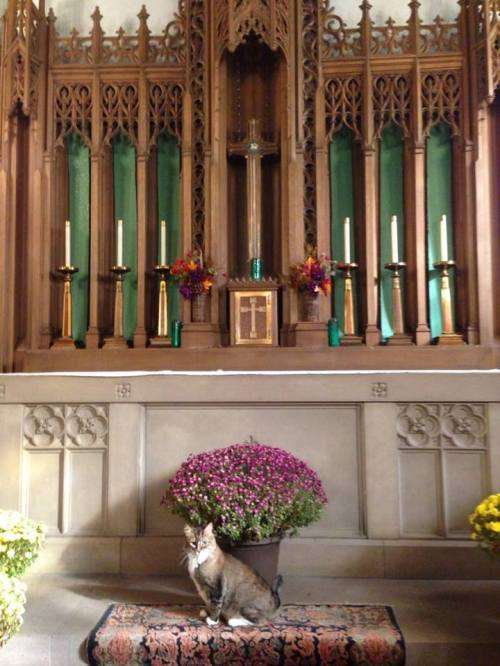 Church of the Advent, Chicago, 2014. (The Episcopal Church)