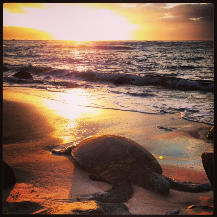 For joy in God's creation: a giant turtle on the north shore of Oahu, Hawai'i.