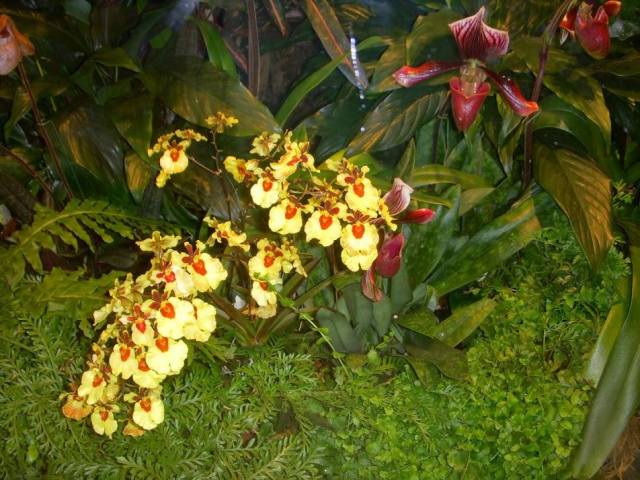 For joy in God's creation: orchids at the New York Botanical Gardens (June Butler)