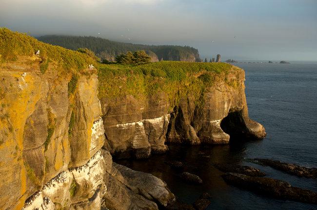 Gor the beauty of the Earth: Tatoosh Island, Washington. (Matthew Ryan Williams/The New York Times)