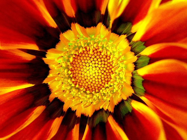 For joy in God's creation: flower in the shape of a mandala