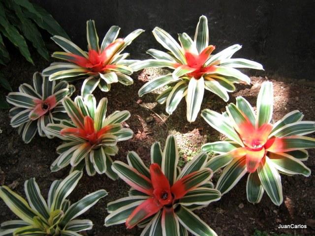 Garden flowers in Guatemala. (Juan Carlos)