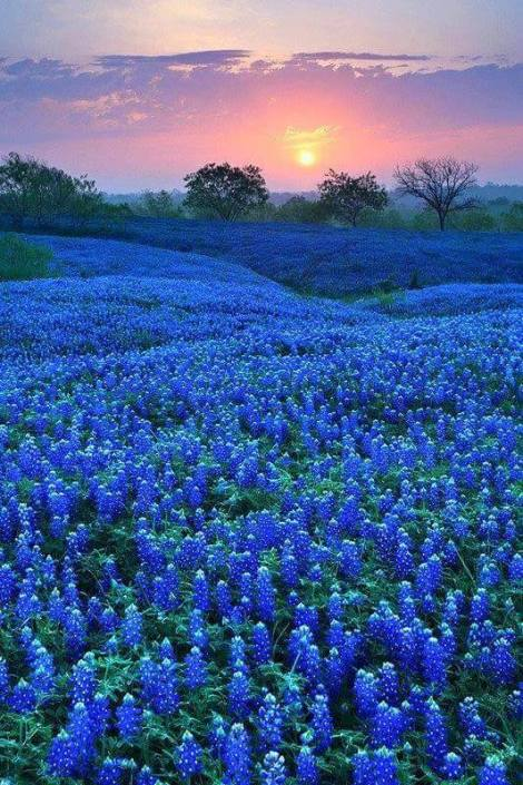 For the beauty of the Earth: you know spring has come to the Texas hill country when the bluebonnets appear. (Globe Aware)