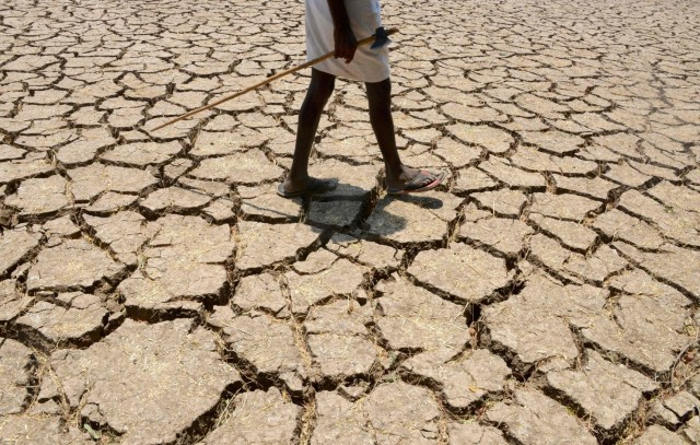 Drought is affecting an estimated 330 million people in 10 states in India, like this cotton field near Hyderabad. To make matters worse, politicians in Maharashtra have been allowed to build sugar factories, leading farmers to put their fields into sugar cane, one of the worst water-guzzling crops. Now reservoirs are empty, wells a thousand feet deep are running dry, groundwater is depleted, water has to be trucked in to cities and towns, farmers are in debt and losing their land, tens of thousands have left to try to find work in the cities, and those who are left are losing hope and scores have committed suicide. (Noah Seelam/AFP)