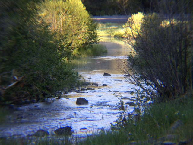 For the beauty of the Earth: a creek in Eastern Oregon. (The Rt. Rev. Nedi Rivera)