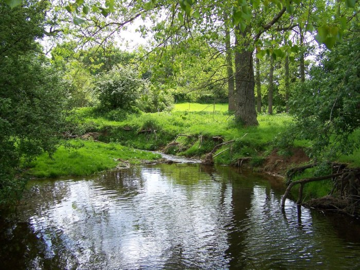 For joy in God's creation: the River Beane at White Hall, Hertfordshire, not far from St. Alban's Cathedral. (thelensflare.com)