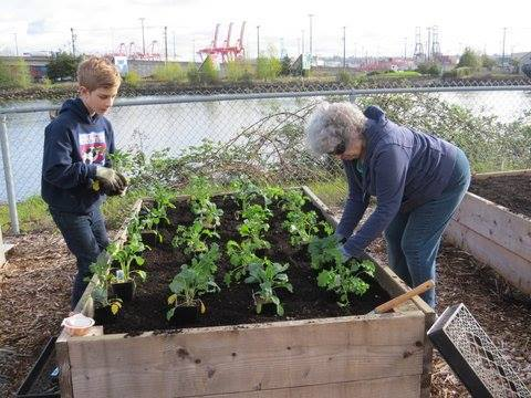 Intergenerational gardeners working on a raised bed at the Seattle Mission for Seafarers, a cool, quiet spot next to the harbor for people who haven't set foot on land for awhile. (Episcopal News Service)