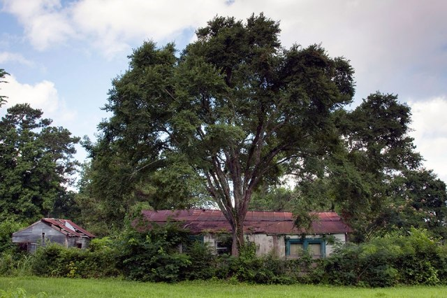 This live oak, and the battered buildings behind it, mark a small Black enclave outside Houston, Texas. It's called Temina (pronounced like Tammany) and was established in 1872 as a freedmen's town - one of hundreds established after the U.S. Civil War. Some thrived into the 20th century, but very few still exist. Farming, once the mainstay of these communities, is no longer profitable on a small scale, and the financial pressure to sell out is often overwhelming. Today Tamina is surrounded by affluent, mostly white developments whose owners no doubt see it as an eyesore. But to the diehards who live here, it means everything their ancestors worked for. Besides the shiny new Museum of African-American History and Culture in far-off Washington, we need to preserve the history and way of life of places like this. Living here was always hard, but it is home, and it's theirs. (Marti Corn/Mother Jones)